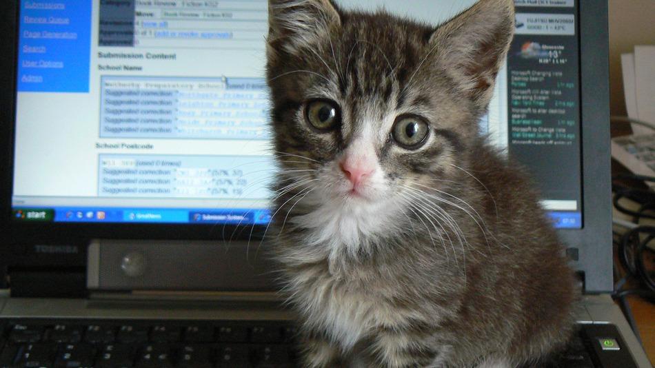 computer-cat-productivity