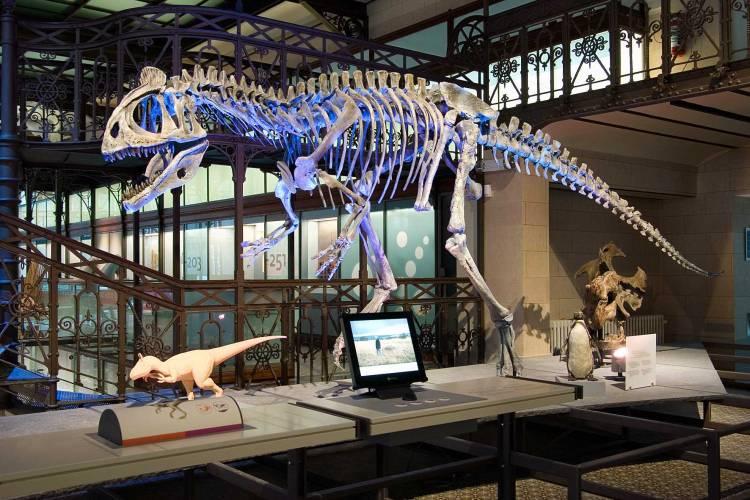 Dinosaur_ Brussels