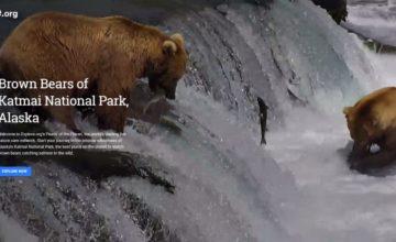 google-earth-alaska-bears