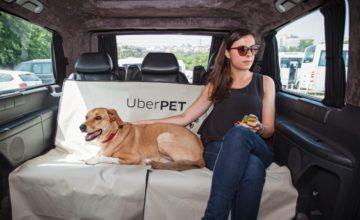 Uber Pet permet de prendre son animal de compagnie avec soit lors d'un trajet