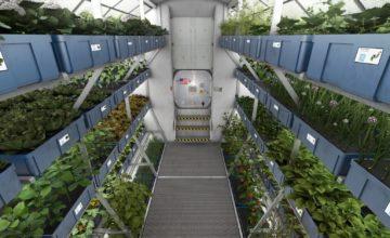 La laitue cultivée à bord de l'ISS aussi saine que celle cultivée sur Terre