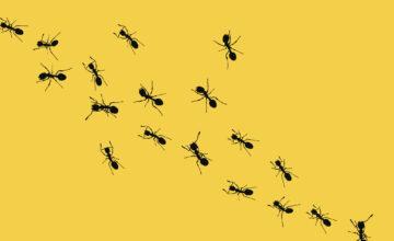 Des fourmis ont envahi son PC