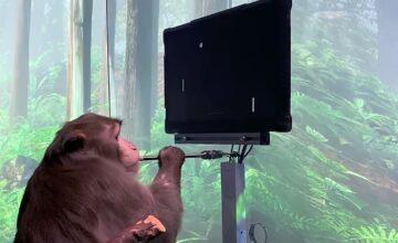 Neuralink publie une vidéo d'un singe jouant à Pong par la pensée